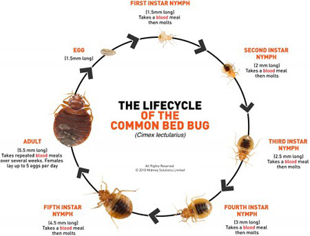 Valley Termite Pest Control Bed Bugs