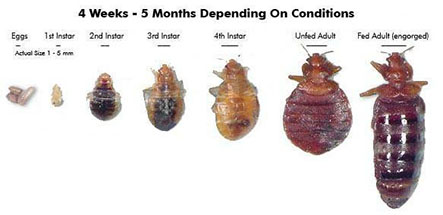 Valley Termite Amp Pest Control Bed Bugs